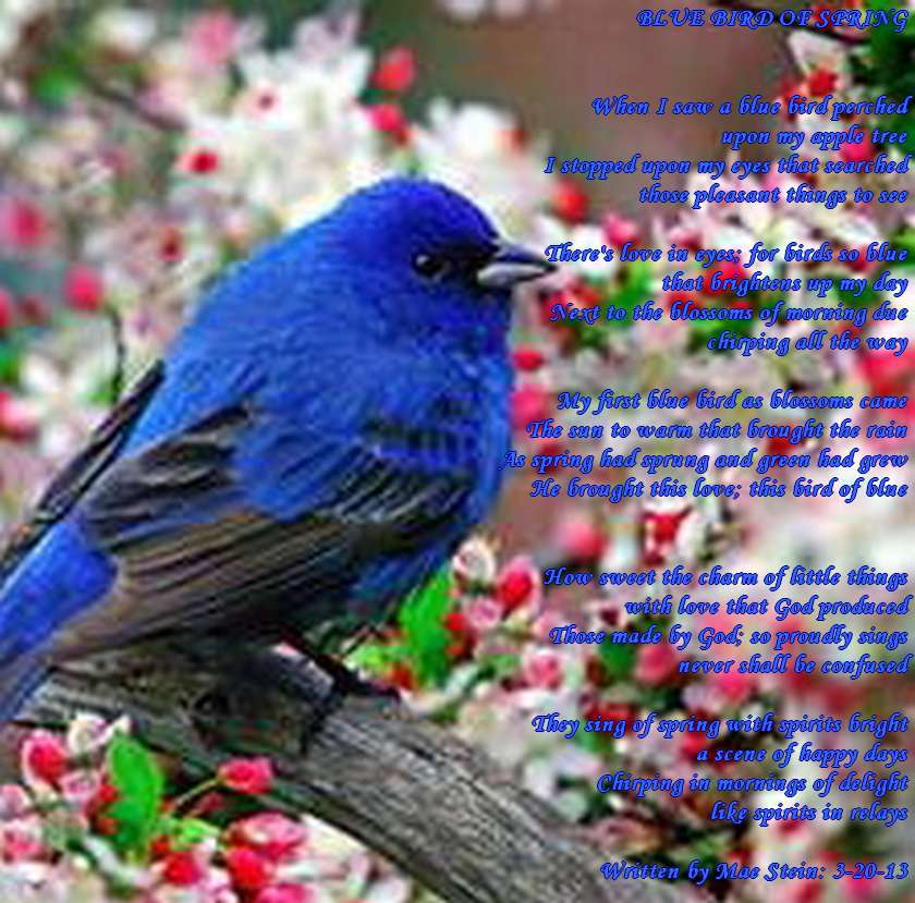BLUE BIRD OF SPRING - Nature Poems