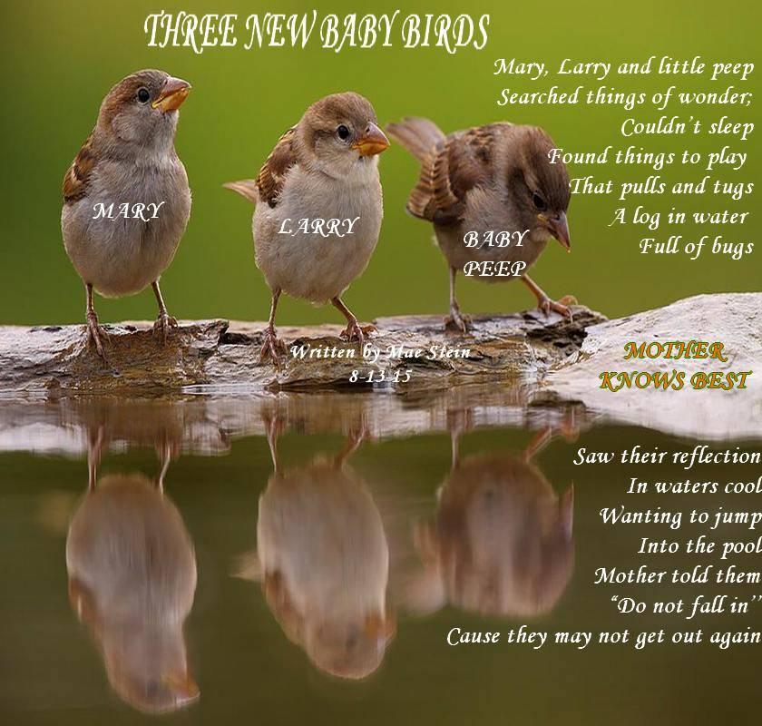 Types of baby birds - photo#27