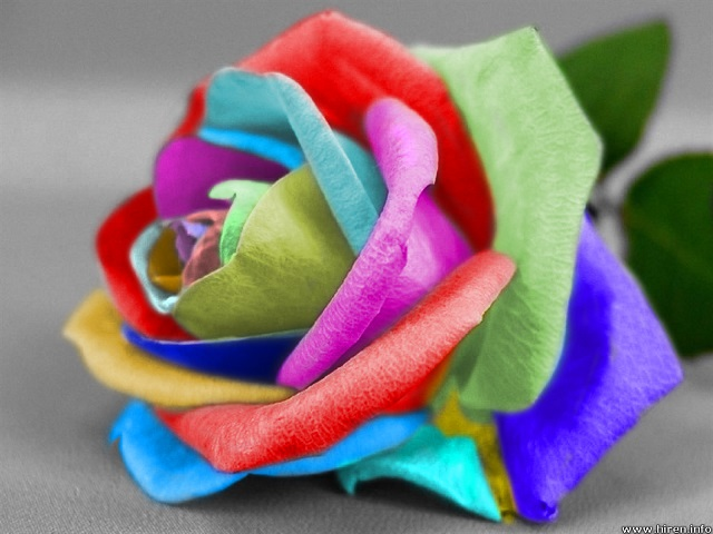 Tie dye rose spiritual poetry for What color is the friendship rose