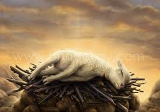 """the sacrificial lamb in the crucible As a youth, i was made to attend some bible lessons (catechism) before i could  receive and eat of the """"holy body of christ"""", which is known as."""