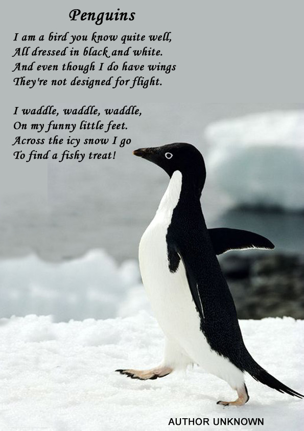 Penguin Love Quotes Poems Simple Penguin Love Quotes