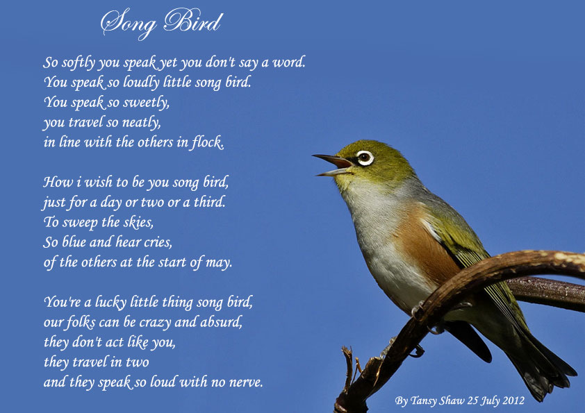 Song Bird - All types of Poetry