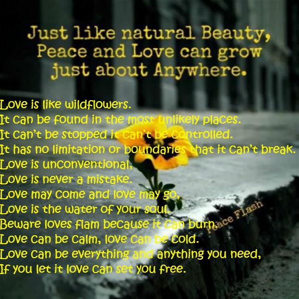 Love is like wildflowers - All types of Poetry