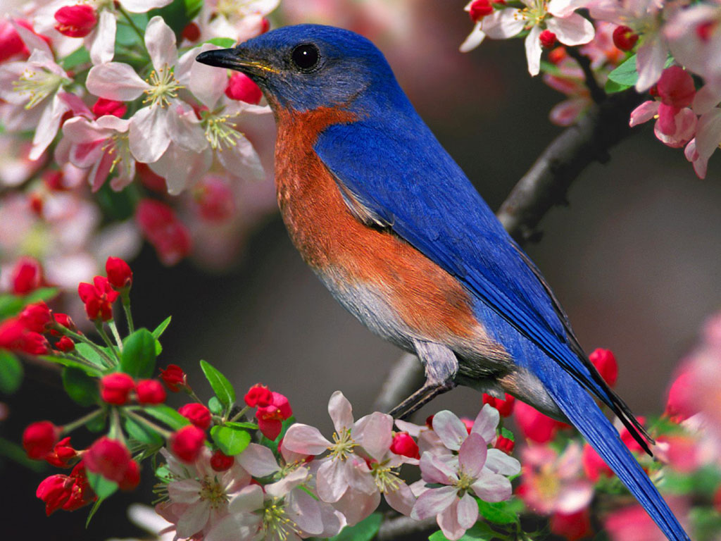 The Beautiful Birds Sing - Nature Poems